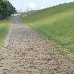 vollgekackter Radweg mit AKW Brockdorf