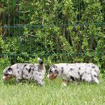 Merlin und Murmel auf Streifzug