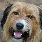Mailo - Rettungshund in Ausbildung