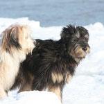21. Februar: Wir treffen uns mit Lupo zu einem Spaziergang am verschneiten Strand von Strande.