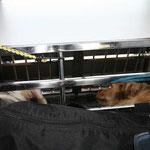 Luna und Kiwi während der Fahrt. In ihrer Kiste erholen sie sich von den vielen Eindrücken und Hundekontakten.