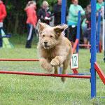 Luna beim Jumping