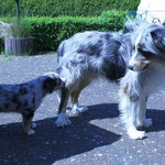Merlin und Ibo