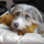 Mein Kissen, mein Teddy, alles meins... Auch wenn´s eigentlich dem Onkel gehört
