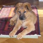 Hedi im neuen Zuhause, Herbst 2007