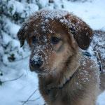 Janus im Schnee