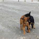Hope und Havanna haben sich im Frühjahr 2008 zufällig auf der Insel Röm getroffen