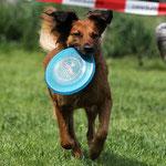 Havanna beim Frisbee, © Hjordis Lübker
