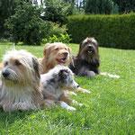 Kiwi, Murmel, Luna und Nala, Juli 2012