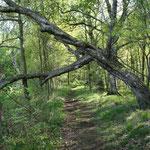 Im Kaltenhofer Moor
