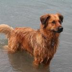 Hedi in ihrem Badesee - ein herrlich klarer, einladender Kiessee. Kurz nach dem Bild kam allerdings das Gewitter...