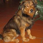 Janus, Weihnachten 2010