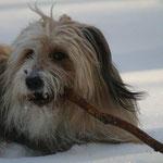 November: Wir treten aus der HundeLobby aus. Der Wäller-Club beansprucht zu viel Zeit, die inhaltiche Arbeit der HundeLobby stagniert.