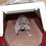 Katzenkorb als Vorgeschmack auf spätere Transportboxen