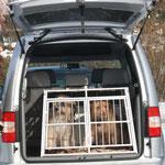 Januar: In ihrer neuen Hundebox in unserem neuen Auto reisen Luna und Kiwi ab sofort sicher und vorschriftsmäßig