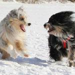 Murmel und Kimba beim Geschwistertreffen, März 201
