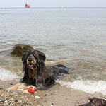 Lupo in der Ostsee