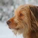 Dezember: Ich trete in der Tierschutzverein für Kiel und Umgebung ein.
