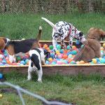 Molly in der Hundeschule
