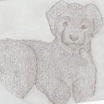 Sam, gezeichnet von Dwayne, Juni 2010