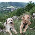 26. Juli: Jens verbringt den Tag mit dem Auto in der Werkstatt. Denise und die Hunde genießen den ungewohnten Ausblick.