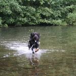 Laut ihrer Besitzerin schwimmt Lina gerne wie eine Rentnerin ihre Runden - es geht aber auch mit mehr Schwung