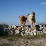 1. Oktober: Die Hunde-Strandsaison ist eröffnet. Bis Ende März dürfen wir jetzt wieder an allen Stränden spazieren.