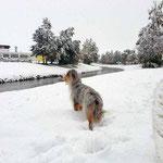 und dann das: 20 cm Schnee über Nacht!