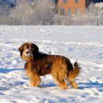 Molly, Winter 2010