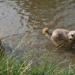 Jucca hat einen Fluss direkt vor der Haustür - toll!