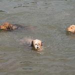 Wäller-Schwimmkurs