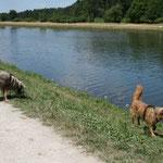 Am Main-Donau-Kanal können die Hunde endlich mal frei laufen. Gestern ist Jens hier noch geschwommen.