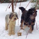 Bilbo und Joda, Dezember 2009