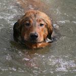 Janus schwimmt sehr gerne