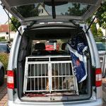 Luna und Kiwi wissen ihre Kiste im klimatisierten Auto zu schätzen