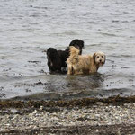 Jeannie und Bruder Lupo in der Ostsee, 13. Juni 2010