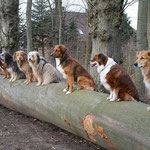 Die Wandertruppe: Hennes, Emma, Zora, Luna, Kiwi, Carlsson, Jessi, Dunja