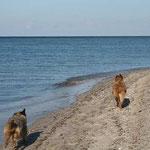 Bahn frei für die Strand-Wäller