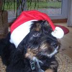 Pelle, Dezember 2007