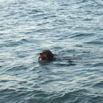 Molly in der Ostsee, Sommer 2010