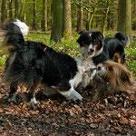 In einem Waldstück bei Scharbeutz dürfen die Hunde offiziell trainieren