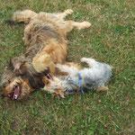 Molly mit Yorkshire-Terrier Cartaysa, Sommer 2010
