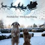 24. Dezember: Luna und Kiwi wünschen frohe Weihnachten.