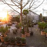 mediterrane Pflanzen kaufen Gärtnerei Hupp Höchberg