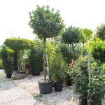 Gartenbaumschule große Auswahl an Bäumen, Pflanzen, Sträuchern und Stauden in Höchberg, Würzburg, Kist, Hettstadt, Eisingen, Waldbrunn, Waldbüttelbrunn