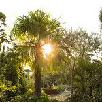 mediterrane Pflanzen wie zum Beispiel Palmen