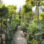 Gartenbaumschule