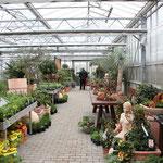 Kräuter und Gemüsepflanzen kaufen in Höchberg, Würzburg ,Kist, Eisingen, Hettstadt, Waldbrunn, Waldbüttelbrunn, Altertheim, Unterfranken