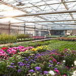 Frühlöingspflanzen kaufen in Höchberg, Würzburg, Kist, Hettstadt, Eisingen, Waldbrunn, Waldbüttelbrunn