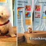 DM Bogenlauf 20./ 21.09.2014 in Zepernick